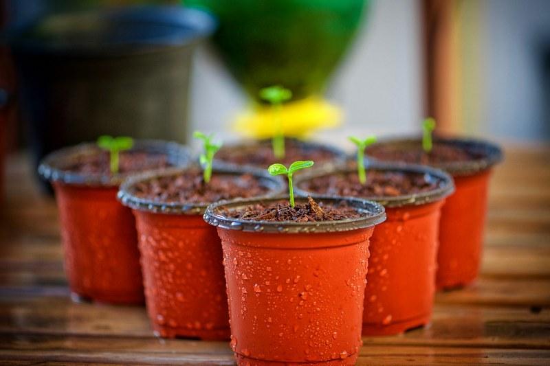 I trucchi migliori per coltivare le piante autofiorenti outdoor in vaso